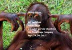 Los Altos Follies 2016, Don't monkey around, see and hear the Los Altos Follies 2016
