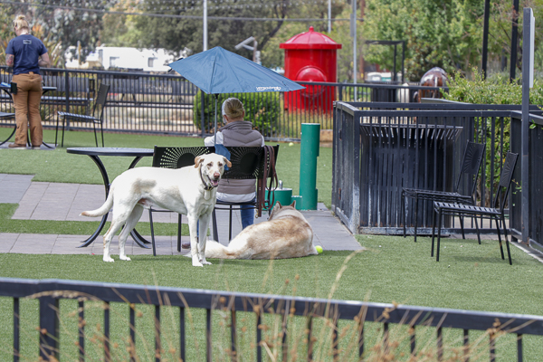 This dog park is next to the Kohls 10th site